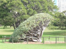 1-sydney_botanicgarden_8