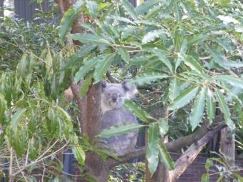1-sydney_zoo