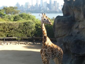 1-sydney_zoo_1