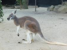 1-sydney_zoo_15