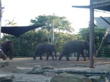 1-sydney_zoo_17