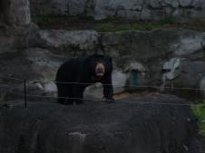 1-sydney_zoo_19