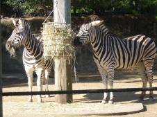 1-sydney_zoo_3