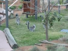 1-sydney_zoo_5