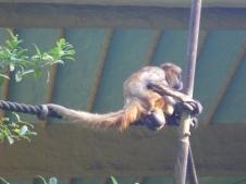 1-sydney_zoo_6