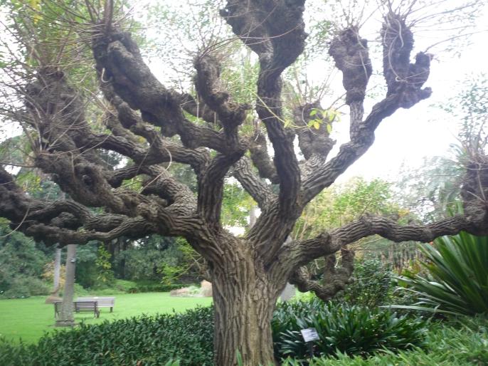 10-melbourne_botanic